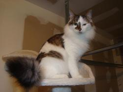 Domino, chat Gouttière