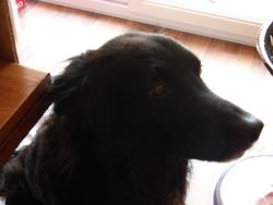Tijuan, chien