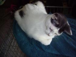 Pierrot, chat Gouttière