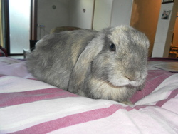 Wendy, rongeur Lapin