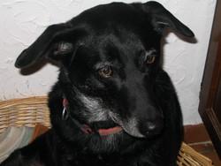 Sissi, chien