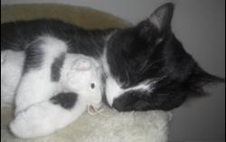 Félix Picasso, chat Gouttière