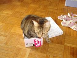 Dinha, chat Gouttière