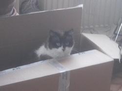 Chatmiaou, chat Gouttière