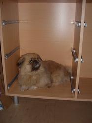 Saphir, chien