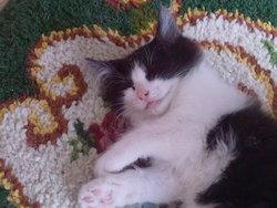 Céna, chat Gouttière