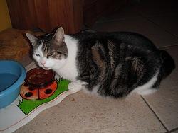 Garou, chat Gouttière
