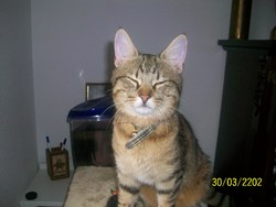 Zippo, chat Gouttière
