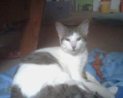 Fergie, chat Gouttière
