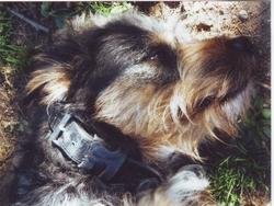 Teo, chien