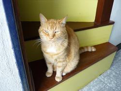 Spirou, chat Gouttière