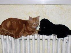 Wisky, chat Gouttière