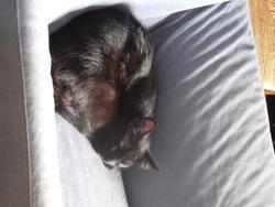 Onoka, chat Gouttière