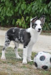 Euréka, chien Border Collie