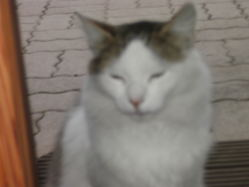 Kagou, chat