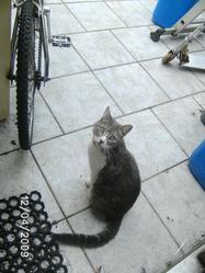 Mini, chat Gouttière