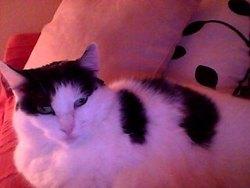 Sheenah, chat Gouttière