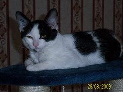 Elfie, chat Gouttière