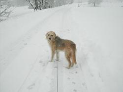 Belle, chien