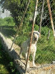 Titoune, chien
