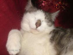 Guismo, chat Gouttière