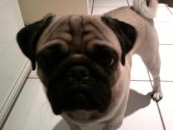 Diego, chien Carlin