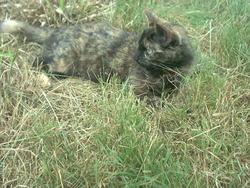 Petite Féfé, chat