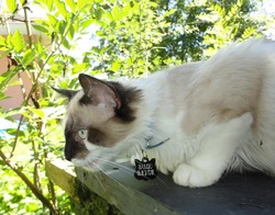 Balou, chat Gouttière