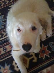 Febee, chien