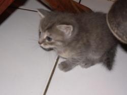Stonie, chat Gouttière