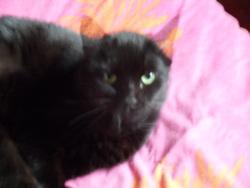 Céléstine, chat Gouttière