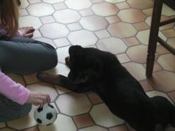 Démon, chien Rottweiler