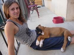 Goliath, chien Boxer