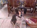 Rustine, chien