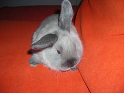 Smocky, rongeur Lapin