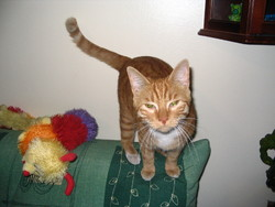 Boubou, chat Gouttière