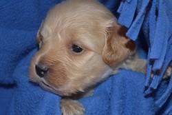 Jasper, chien