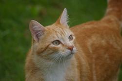 Rusty, chat Gouttière