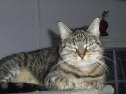 Scarlette, chat Gouttière