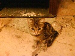 Ilyou, chat