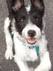 Rakuen, chien Border Collie