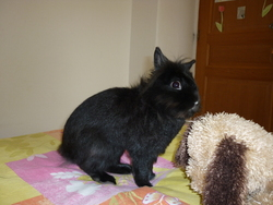 Enzo, rongeur Lapin