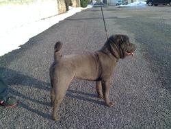 Ether, chien Shar Pei