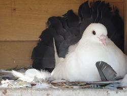 Pigeonnier, autres