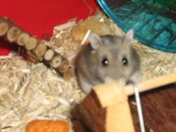 Tuk Junior, rongeur Hamster