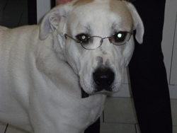 Tupac, chien