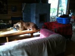 Titeuf, chien Boxer