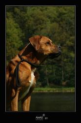 Fabio, chien