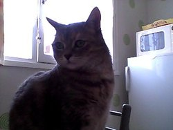 Thalia, chat Gouttière