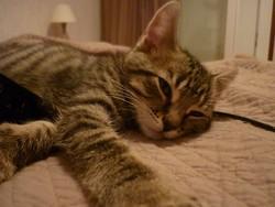 Eve, chat Gouttière